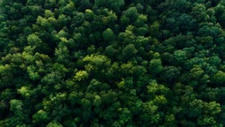 Top of trees looking down from drone