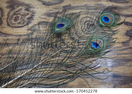 Top or flat lay view of a peacock feathers on a wooden background. Celebrate by a hindu religions.  A religions conceptual.
