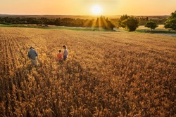 Top view. A farmer, his wife and his son in their wheat field at sunset. They are watching their crops.
