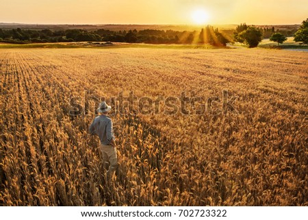 Top view. A farmer standing in his wheat field at sunset. He is watching his crops. #702723322