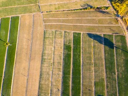 Top view Aerial photo of green field,Shallot Farm,trees.High angle farm.