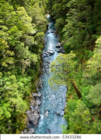 Top view at a  stream in rain forest at New Zealand