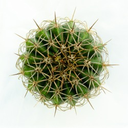 Top view cactus isolated on white background.