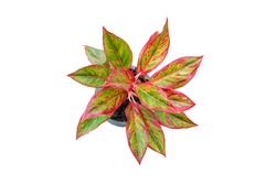 Top View Colorful Leaves In Pot On White Background
