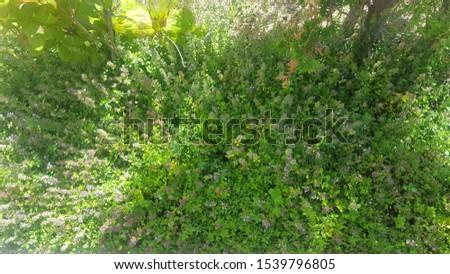 Top view evergreen shrub.green shrub. #1539796805