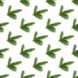 Top view flat lay green fir tree spruce seamless repeat pattern on white background