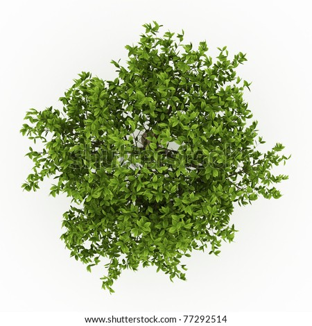 top view Green Apple tree isolated over white