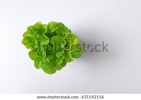Top view green leaf mint plant in pot isolated on white desk background #631542116