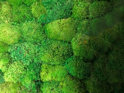 top view green moss layout/ moss background