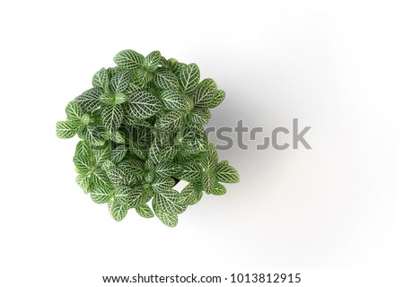 top view green plant in pot isolate on white background #1013812915