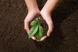 top view hand holding young tree on soil background for planting in garden
