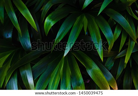 Top view leaf background.Green leaves color tone dark in the morning.Tropical Plant in Thailand,environment,good air.photo concept nature and plant.
