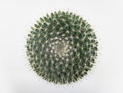 Top view mini circle cactus no little pot  white background