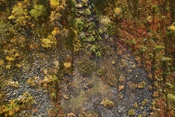 Top view of a beautiful swamp among autumn forests with bright trees in the mountains. Abstract aerial photography of a landscape in the north in the form of a texture and a map of the earth