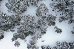 top view of a forest in winter, landscape of nature in a snowy forest, aero photo