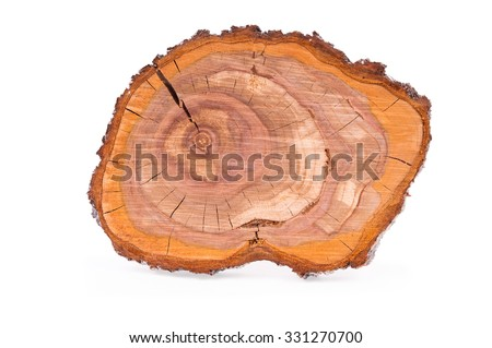 Top view of a tree plum stump sliced isolated on white background