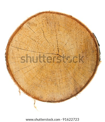Top view of a tree stump isolated on white background