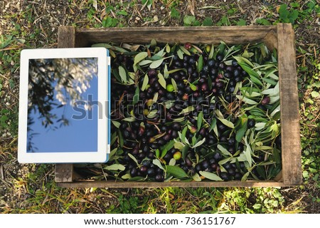 Top view of a wooden box full of olives and a ipad resting on it. Concept of: app of agriculture, olives, tradition and technology