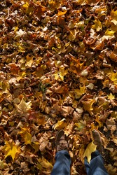 Top view of autumn colorful leaves in the park on the ground in the evening. A man walks along a path in the park. Maple leaves of red, yellow and green color lie on the ground.