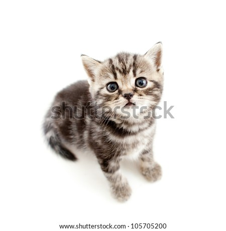 top view of baby cat isolated on white background