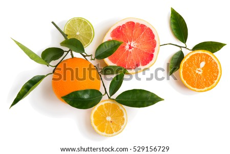 Top view of branch of citrus tree with lime, lemon, grapefruit and orange fruits isolated on white background.