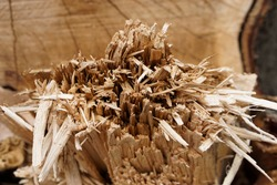 top view of broken cut stump show many splinter