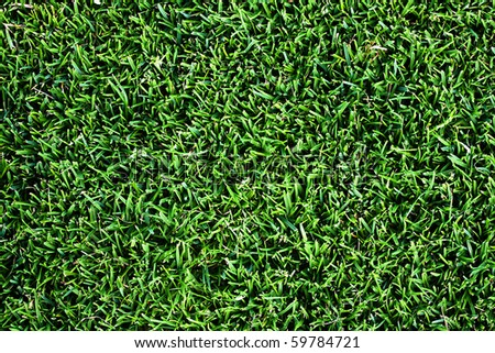 Top view of clean grass background