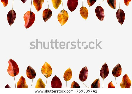 Top view of colored autumn leaves isolated on white #759339742