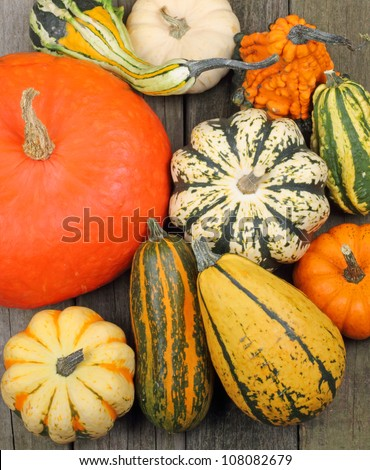 Top view of colorful squash and pumpkins on a rustic wooden surface #108082679