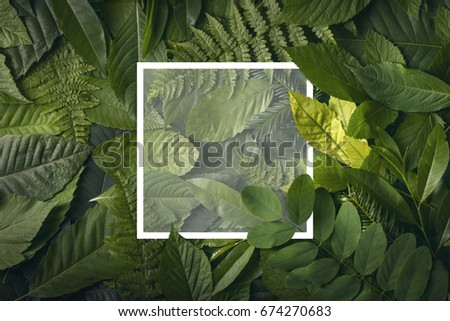 top view of creative layout made out of wild forest leaves with paper card note. Flat lay foliage. Nature concept #674270683