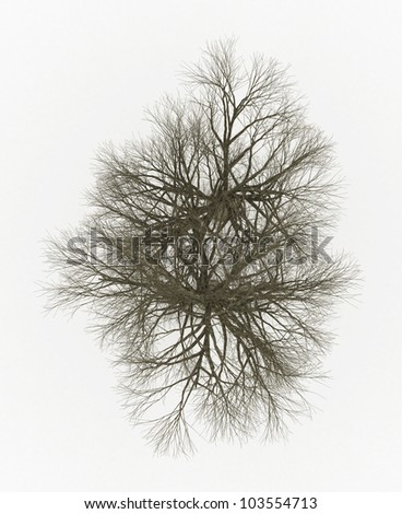 top view of Dead tree isolated on white