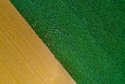 Top view of fertile land with wheat and corn crops. Abstract image of golden and green fields