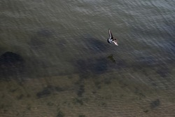 Top view of flying bird above the sea.