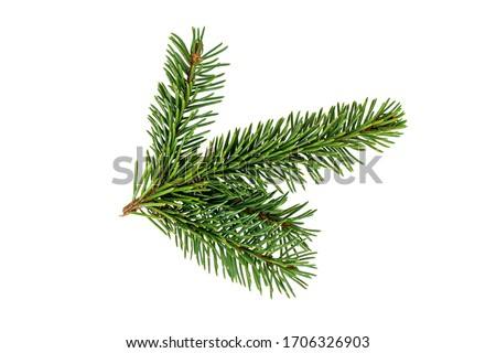 Photo of  Top view of green fir tree spruce branch with needles isolated on white background