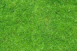 Top view of green grass