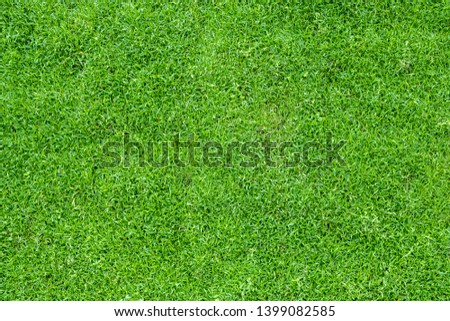 Top view of green grass  #1399082585