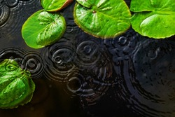 Top view of green lotus leaves with round crossing ripples of water drop , used for background.