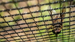 Top view of horse fly stuck in black paintball field net. Macro closeup. Blured background.
