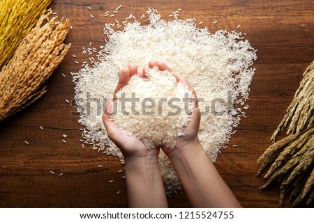 Top view of jasmine rice holding in hands on dark wooden table with rice plants, ear of rices with jasmine rice ,rice scatter on the floor.
