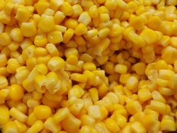 Top view of lots of cooked corn in salad bar counter.