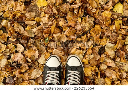 Top View of Man Standing in dry autumn leaves, entering the fall season.  #226235554