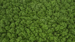 Top view of mangrove forest.