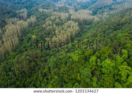 Top view of mangrove forest