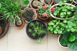 Top view of ornamental plants in potted on terrace tile floor background with copy space, Botanical flowers home decoration and gardening hobbies, Green spaces for freshness in residential.