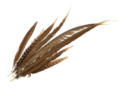 Top view of pheasant tail feathers isolated on white
