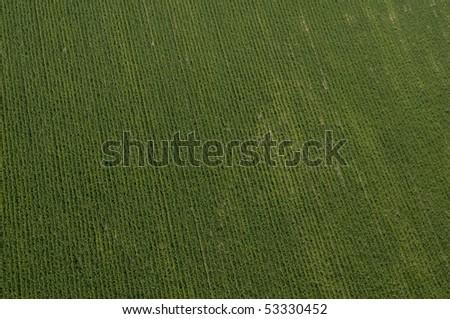 top view of potato Field in Israel