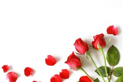 Top view of red rose flower blooming with rose petals at the below corner, isolated on white background