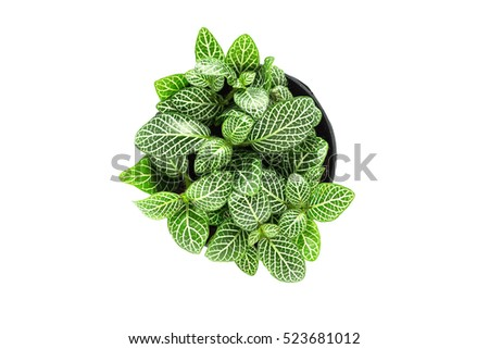 Top view of small plant pot on white background. #523681012