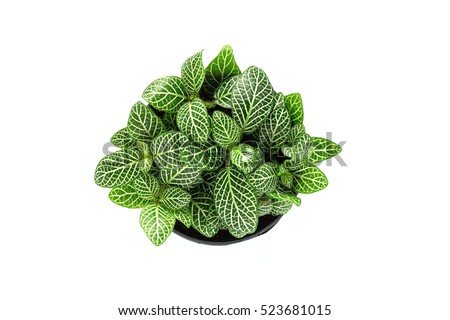 Top view of small plant pot on white background. #523681015