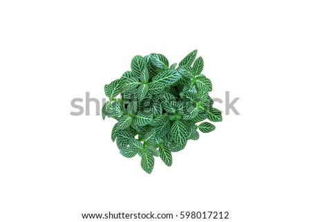 Top view of small plant pot on white background. #598017212